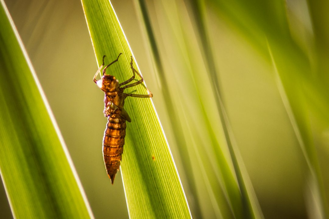 Deutschlands insektenfreundlichste Regionen und Landwirte gesucht