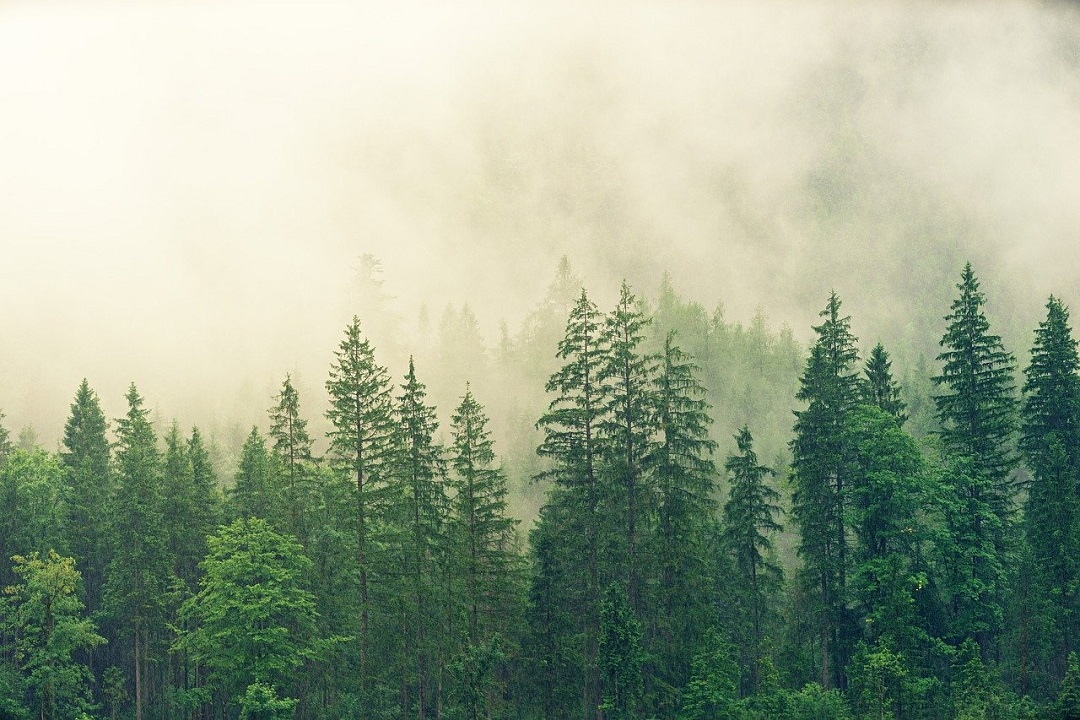 Die nächste Baumgeneration muss sich etablieren können